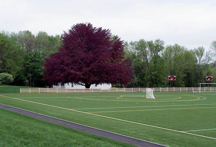 Pomfret School Athletic Fields with Copper Beech